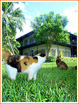 Key West Tourist Attractions Hemingway House