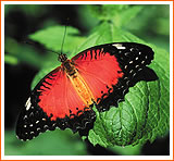 Key West Florida Attractions Butterfly Museum
